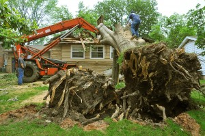 Tree-Removal1